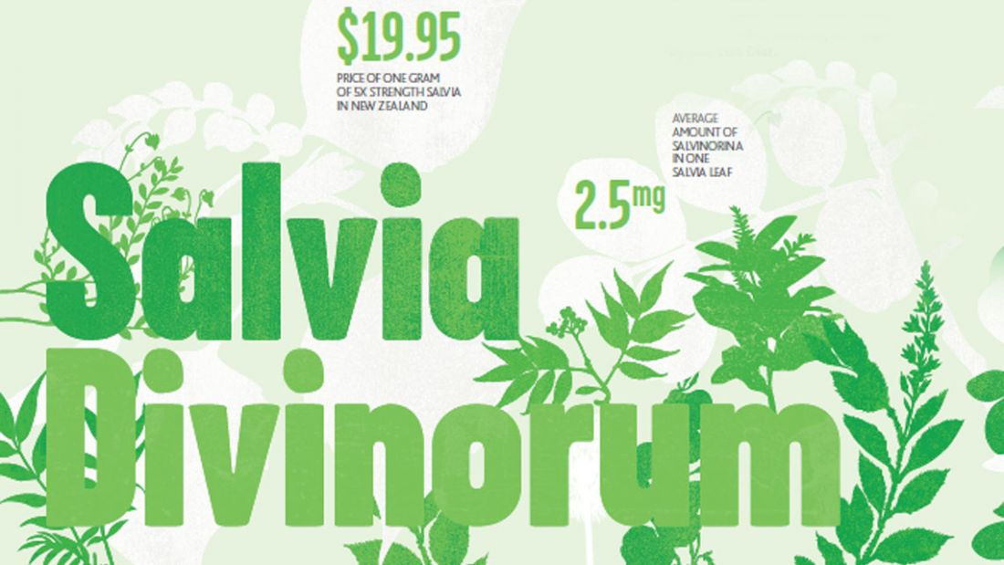 About a drug: Salvia | NZ Drug Foundation - At the heart of