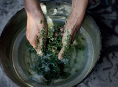hands in bowl with kratom leaves