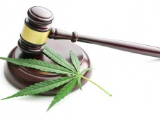 cannabis and gavel