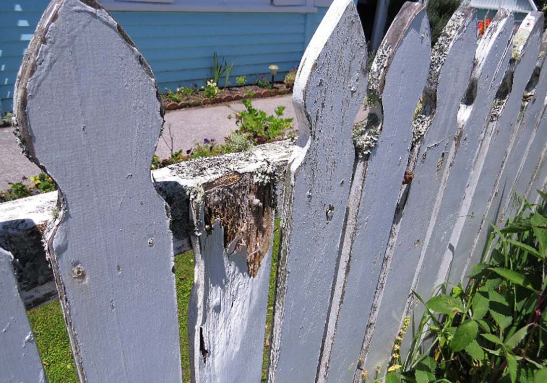 White picket fence with peeling paint