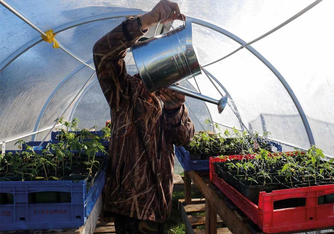 Māori enterprises gear up for medicinal cannabis market | NZ